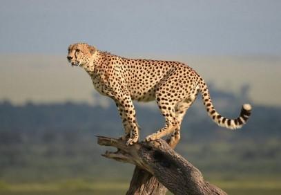 Cultural and Wildlife Combo Safari