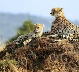 8-Day Wildlife & Cultural Safari