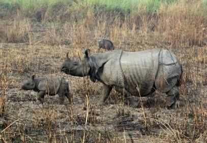 India's Wild East