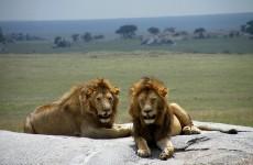 7-Day Migration Camping Safari