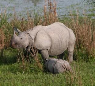 Tea and Wildlife Safari