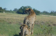 5-Day Big Five Safari in Okavango Delta