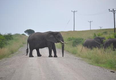 4-Day Gorilla and Wildlife Safari