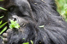 3-Day Gorillas in the Mist Safari