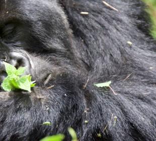 3-Day Gorillas in the Mist Safari
