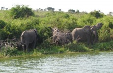 3-Day Queen Elizabeth National Park Safari