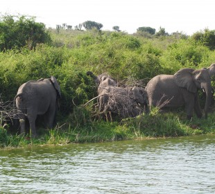 3-Day Queen Elizabeth National Park Safari
