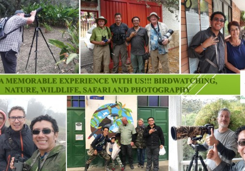 Bogota Birding & Nature Colombia Tours