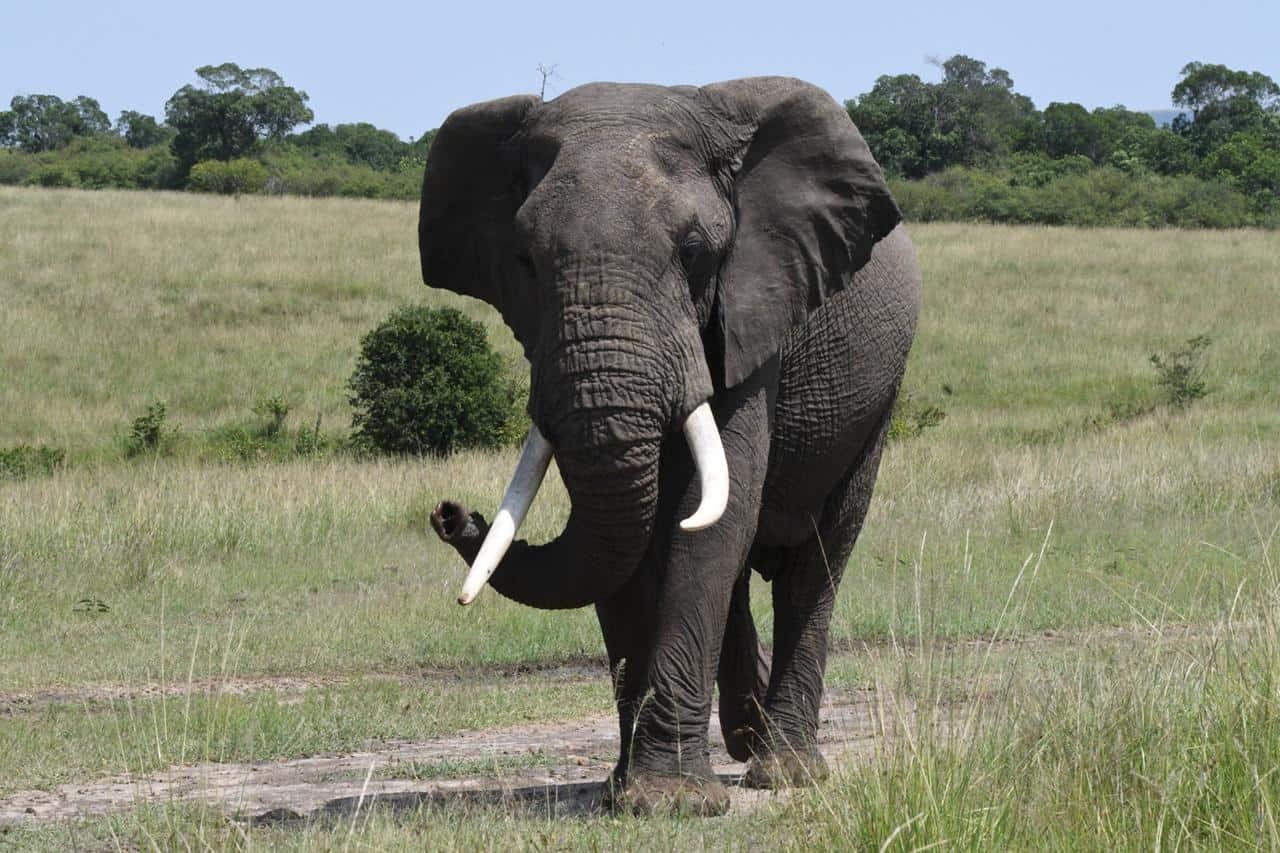 Elephant On Site