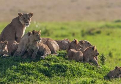 Tanzania Lifetime Adventure