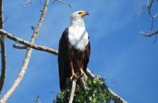 Kenya Birding Photo Safari