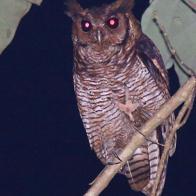 Birding Tours in Ghana.