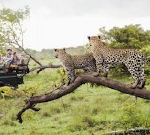 Guided Big 5 Kruger National Park