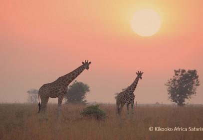 Irresistable Uganda Safari