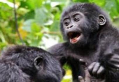 10-Day Rwanda-Uganda Wildlife Safari & Gorilla Trekking