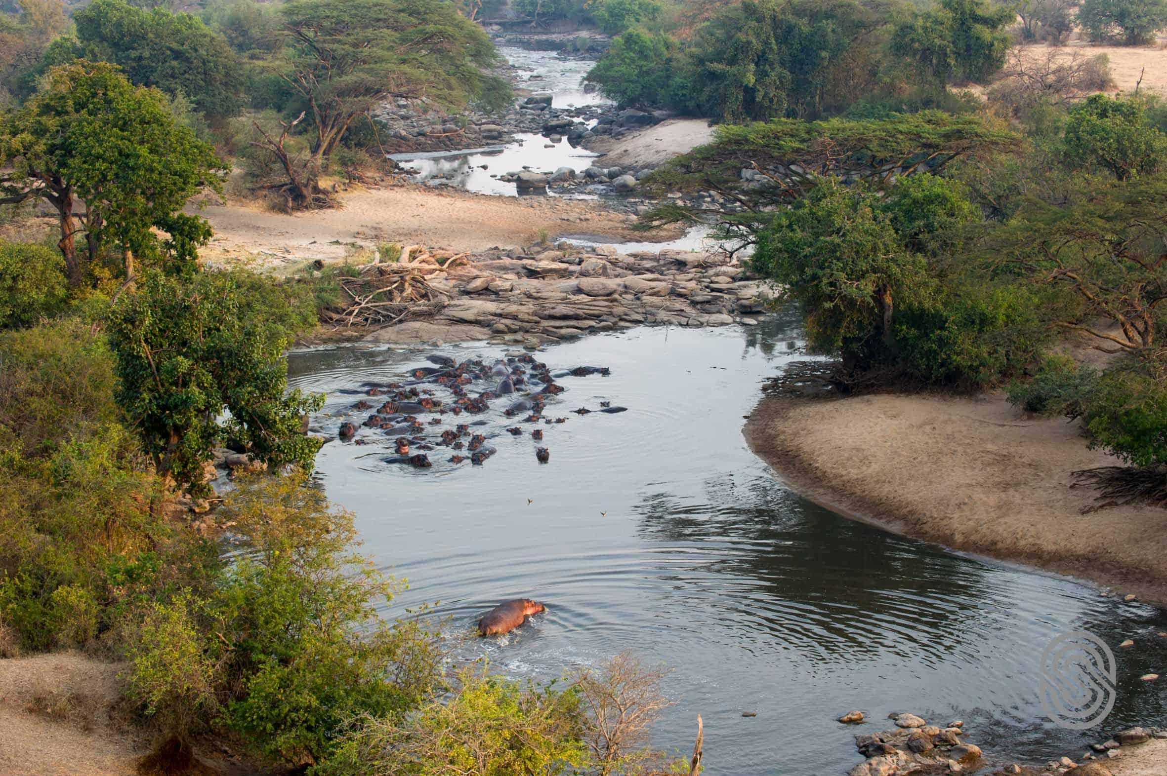 Hippo Views Kirawira Serena Camp