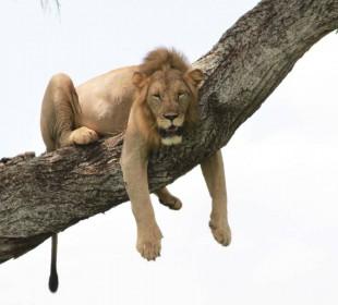 3 Days Tanzania Safari Luxury Tented Camp
