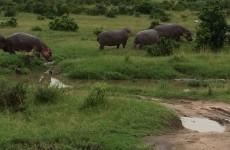 7-Day Kenyan Budget Safari