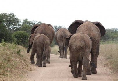 7 Days Northern Tanzania Lodges Safari