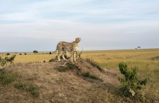Masai Mara Rhino Safari