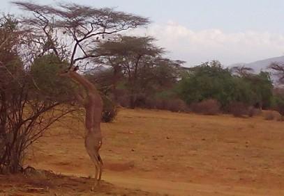 Swara Safari – Lake Nakuru & Masai Mara