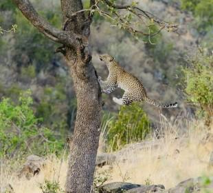 Short Tanzania Wildlife Safari