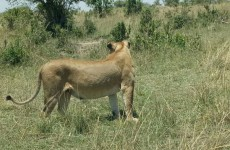 3-Day Masai Mara Budget Safari
