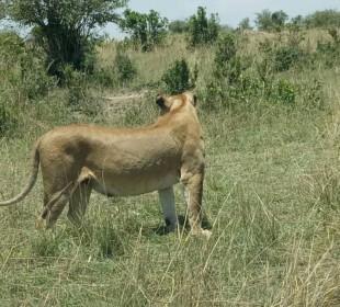 3-Day Masai Mara Budget Safari