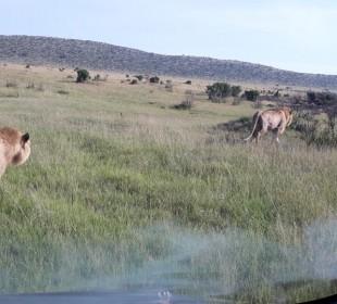 Nakuru, Naivasha, Masai Mara Safari