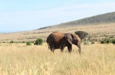 5-Day Masai Mara Nakuru Naivasha Safari