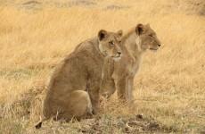 4-Day Central Kalahari Game Reserve and Nxai Pan Safari