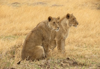 4-Day Central Kalahari Game Reserve and Nxai Pan Safari