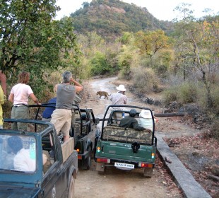 Lure of Indian Wilderness