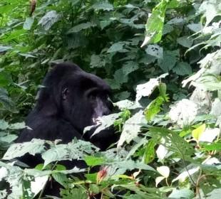 3-Day Uganda Gorilla Trekking
