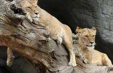 4-Day Tanzania Wildlife Safari