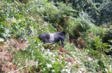 3-Day Gorilla Tracking & Lake Bunyonyi