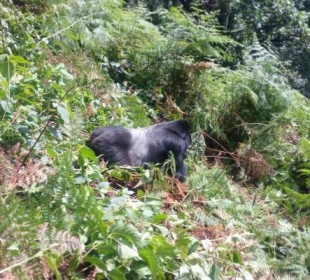 3-Day Gorilla Tracking & Lake Bunyonyi