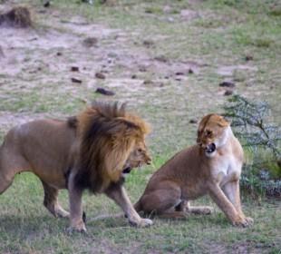 Perfect Maasai Mara Safari Adventure