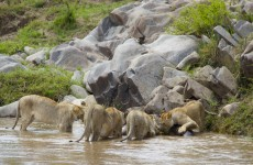 Amazing Budget Safari in Kenya