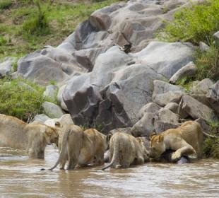 Amazing Budget Safari in Kenya