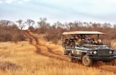 7 Day Sun City & Madikwe Family Adventure