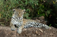 Tanzania Highlights Safari 7-Days