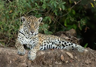 Tanzania Highlights Safari 7-Days