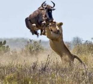 Big Five Safari Kenya & Tanzania