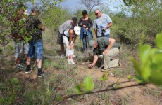 8 Day Kruger & Winelands Family Safari