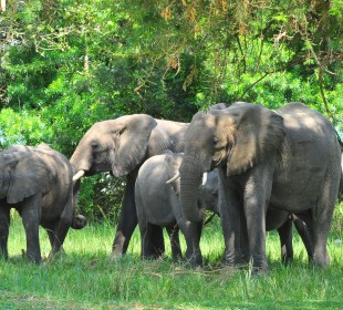 Game Viewing & Chimpanzee Trek