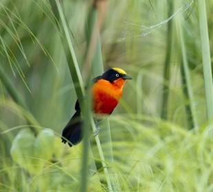 Rwanda Birding Safari