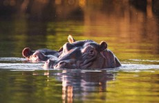 Mwezi Adventure to Kafue & Lochinvar