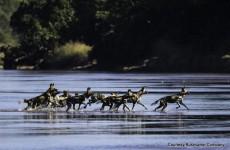 Luangwa Walking Safari