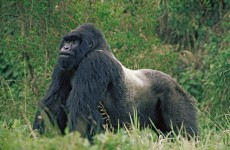 7-Day Best of Rwanda Safari